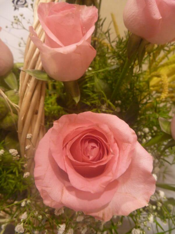 Two Pink Roses photo