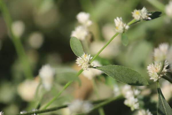 Small White Flowers Garden photo