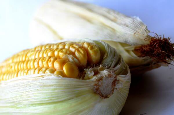 Food Maize photo