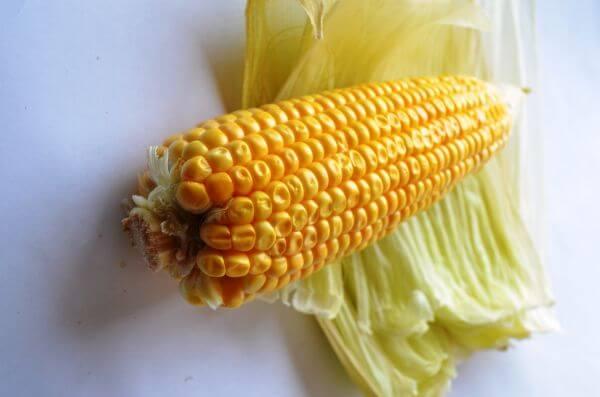 Maize Corn 3 photo