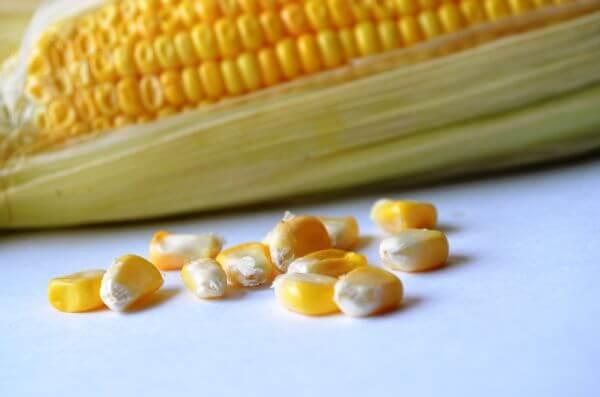Maize Corn Food photo
