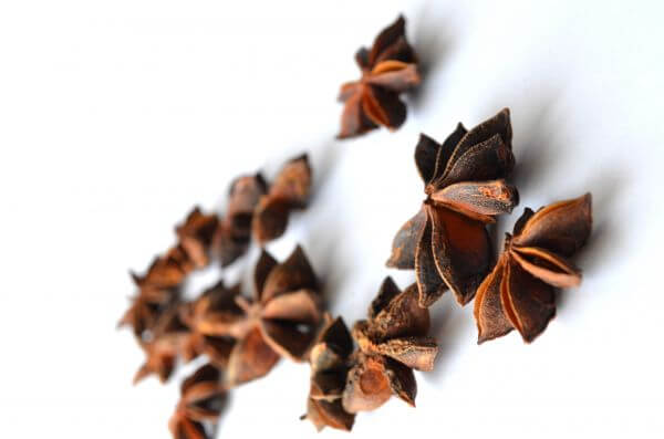 Star Anise 3 photo