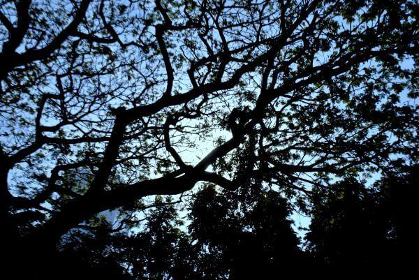 Tree Sky photo