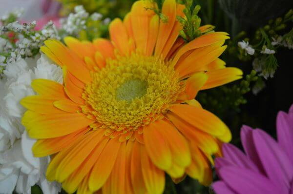 Orange Yellow Daisy photo
