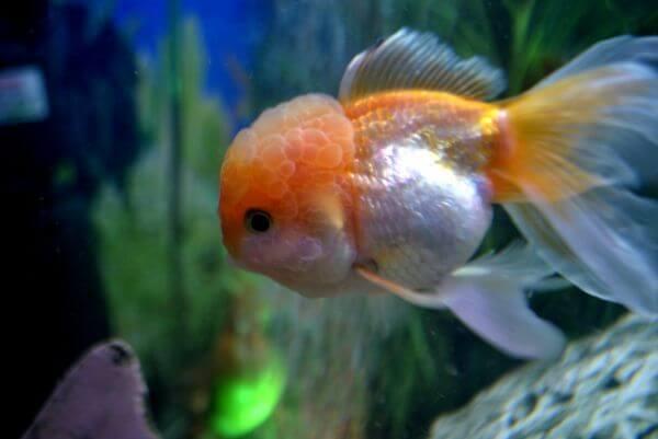 Fish In Tank photo