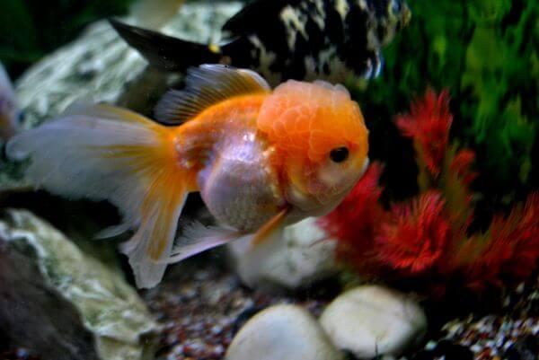 Fish Tank photo