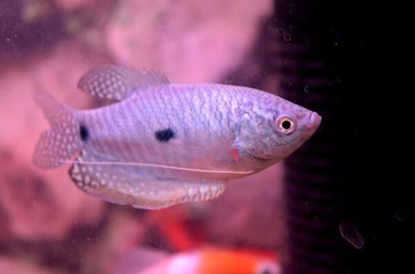 Fish 2 photo