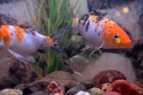 Fish 3 photo