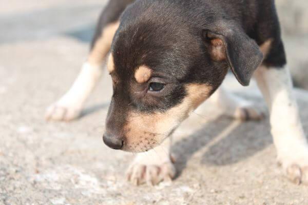 Cute Black Puppy 2 photo