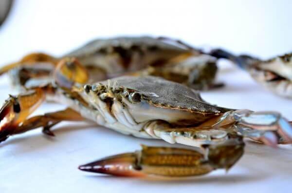 Crabs Sea Edible photo