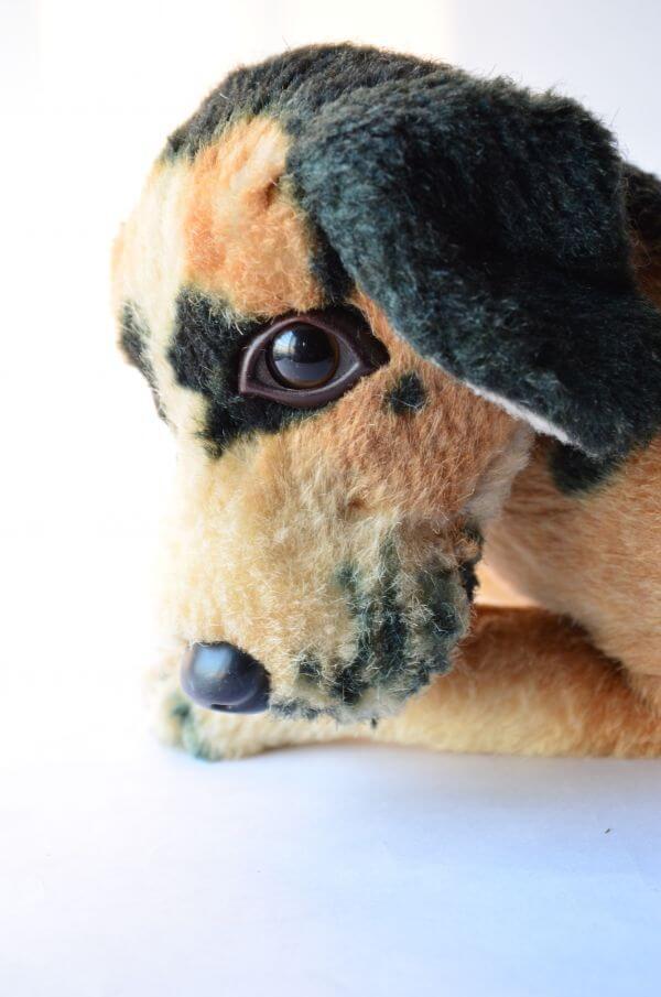 Dog Sad Face 2 photo