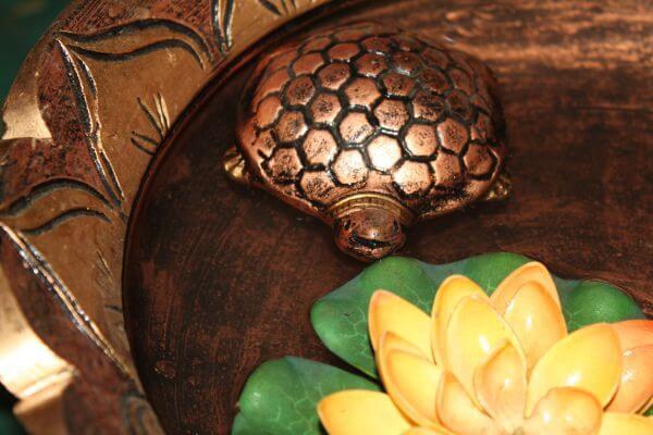 Tortoise In Water Feng Shui photo