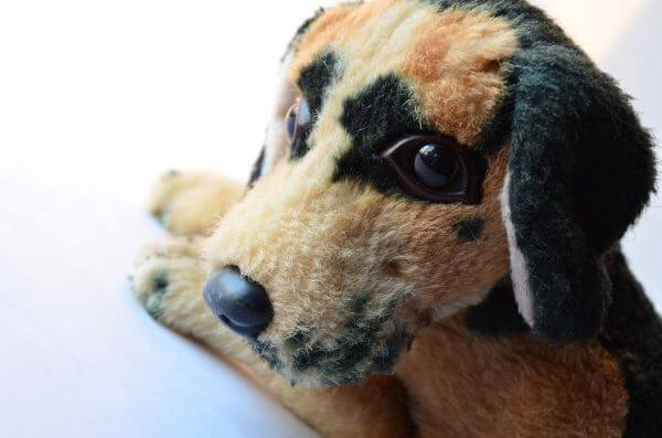 Sad Soft Toy Dog photo