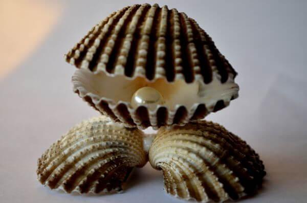 Shell Sea Pearl photo
