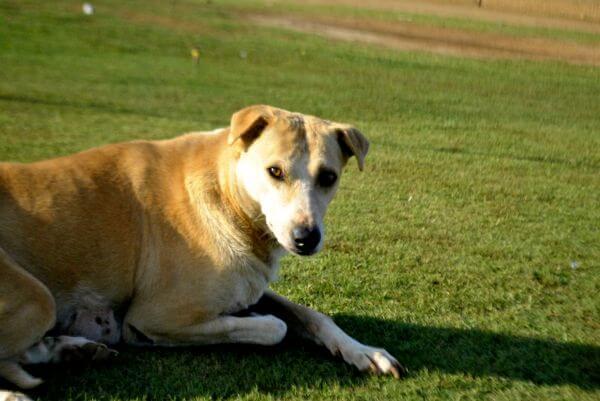 Dog Sitting On Grass photo