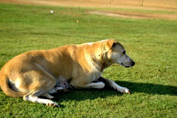 Dog Sitting On Green Grass photo