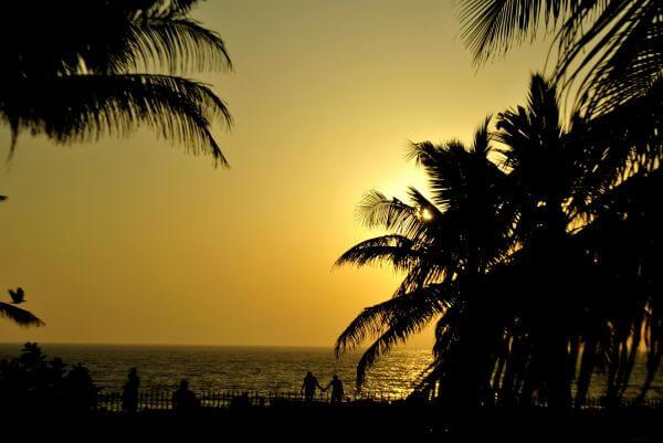 Palm Trees Sunset photo