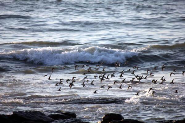 Sea Birds Flying photo