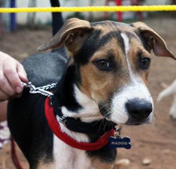 Beagle photo