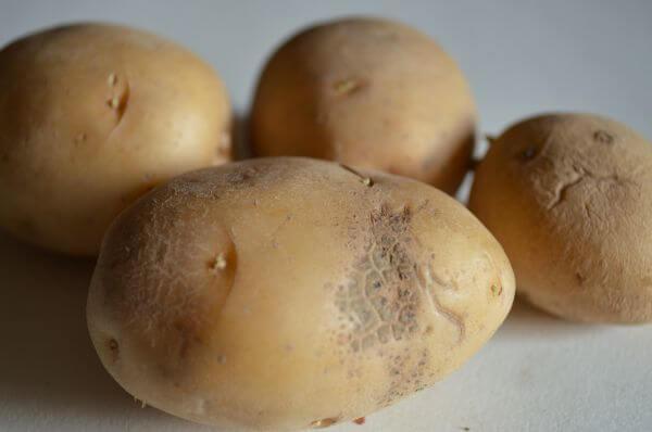 Potato Closeup photo