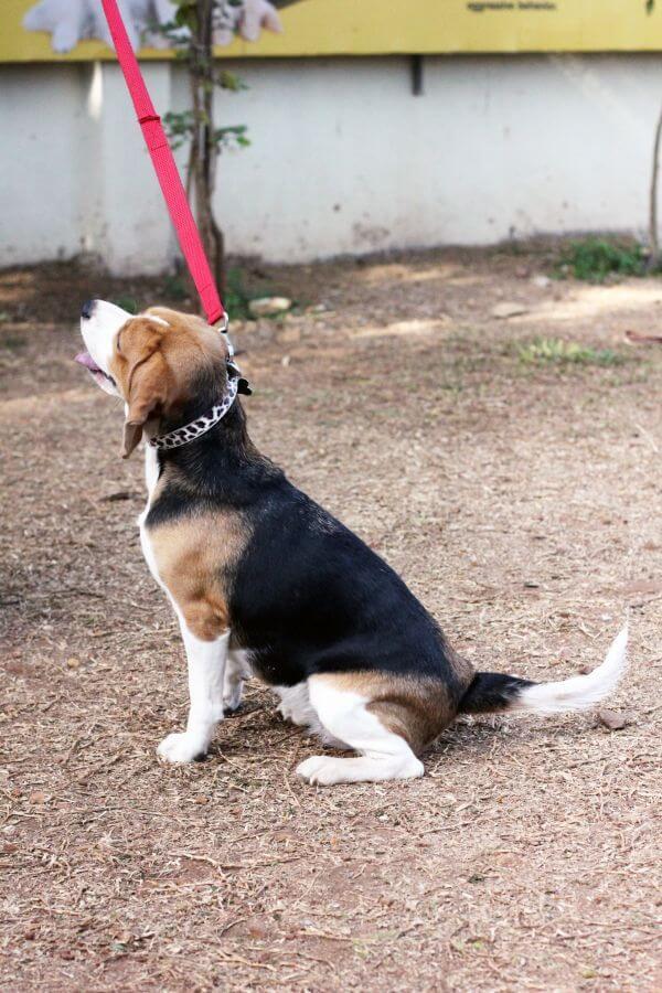 Beagle Sitting Ground photo
