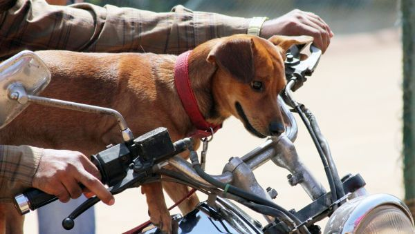 Dog On Motorcycle Cute photo