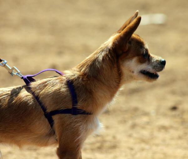 Dog Walk Alert photo