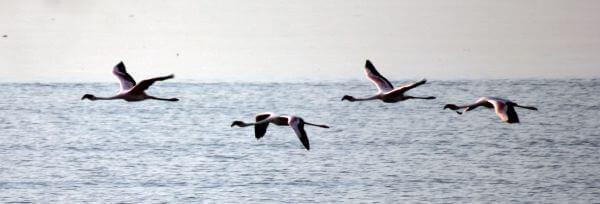 Birds Flamingos Mumbai photo