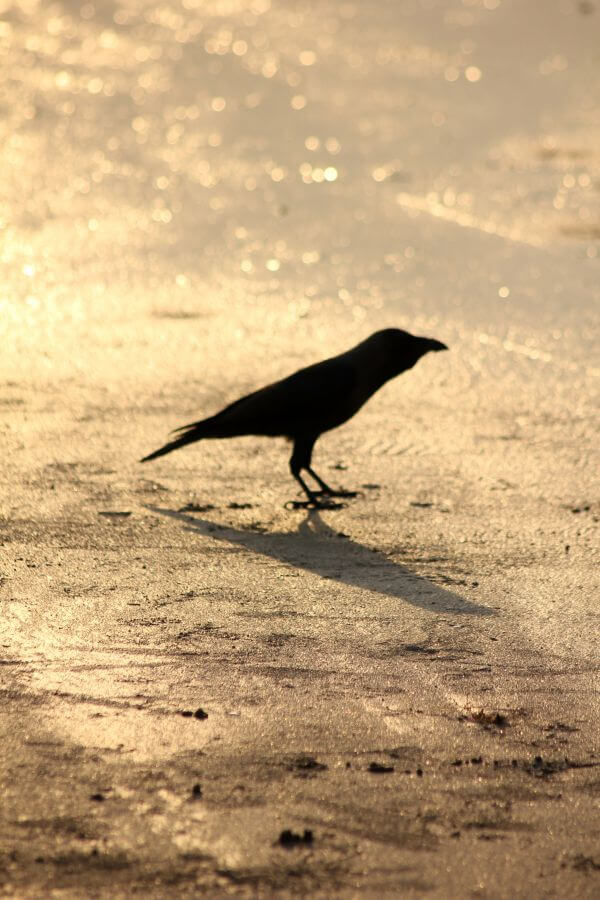 Crow Ground photo