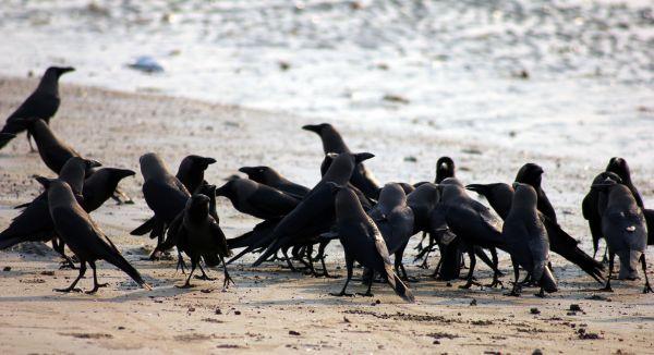 Crow Meeting Group photo