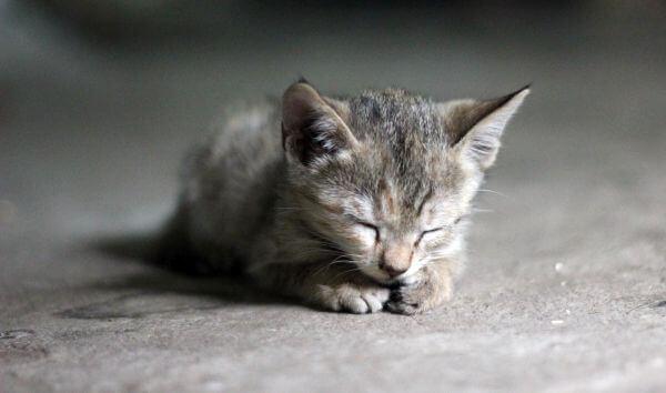 Cute Kitty Cat photo