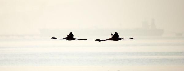 Flamingo Birds photo