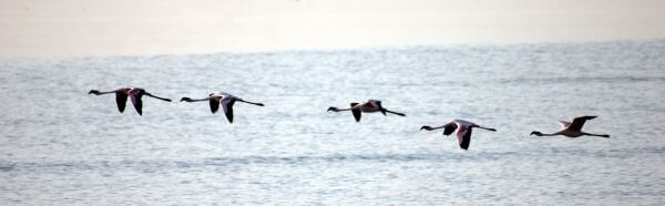 Flamingo Fly photo