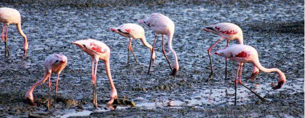 Flamingo Marsh photo