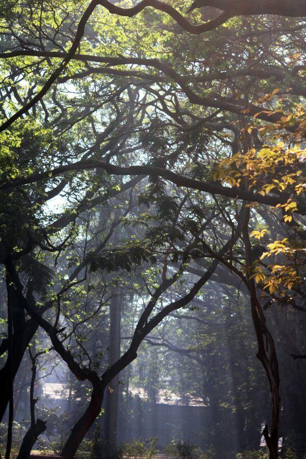 Jungle Sunrays photo