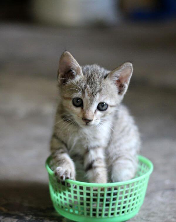Kitten In Basket photo