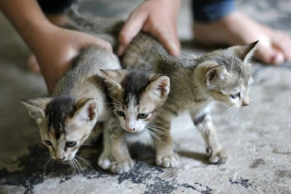 Lots Of Kittens Cats photo