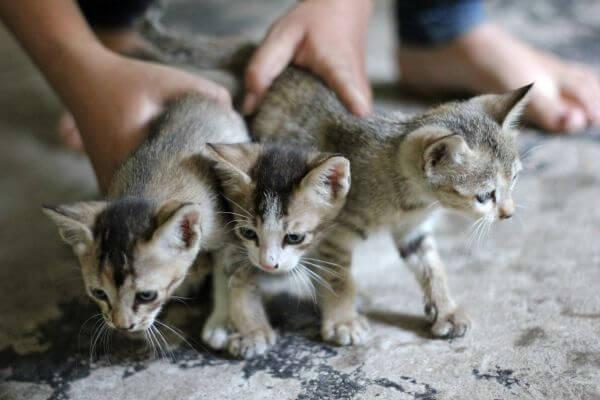 Cat spay and neuter winnipeg