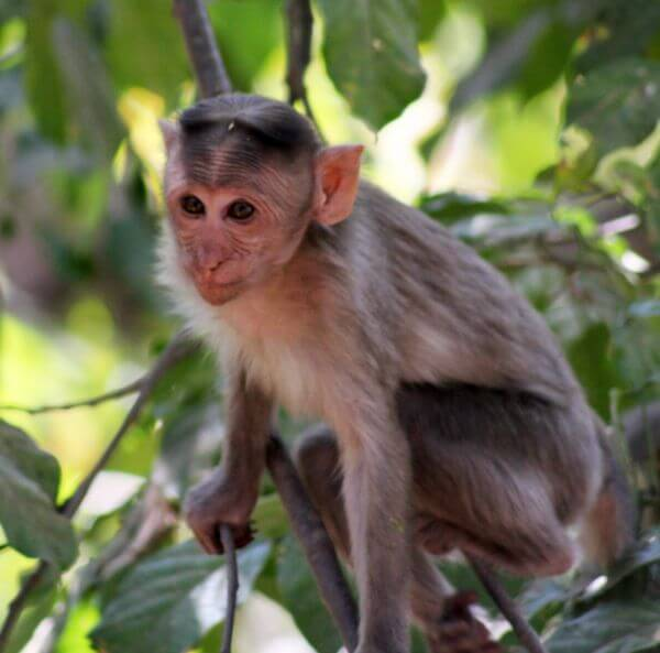 Monkey Sitting On Branch photo