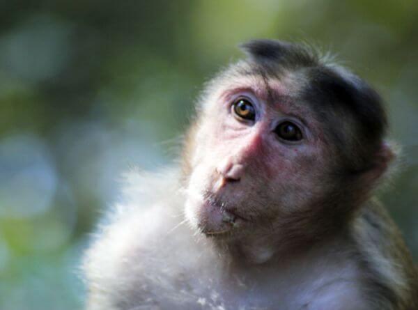 Moods Of A Monkey photo
