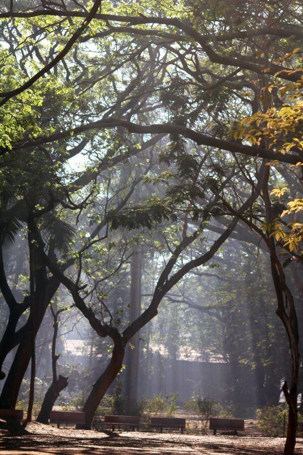 Public Park Trees photo