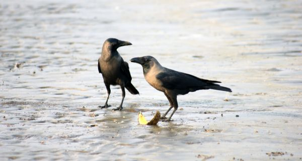 Two Crows photo