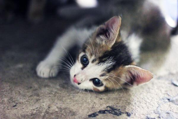 Baby Cat Kitten Face photo