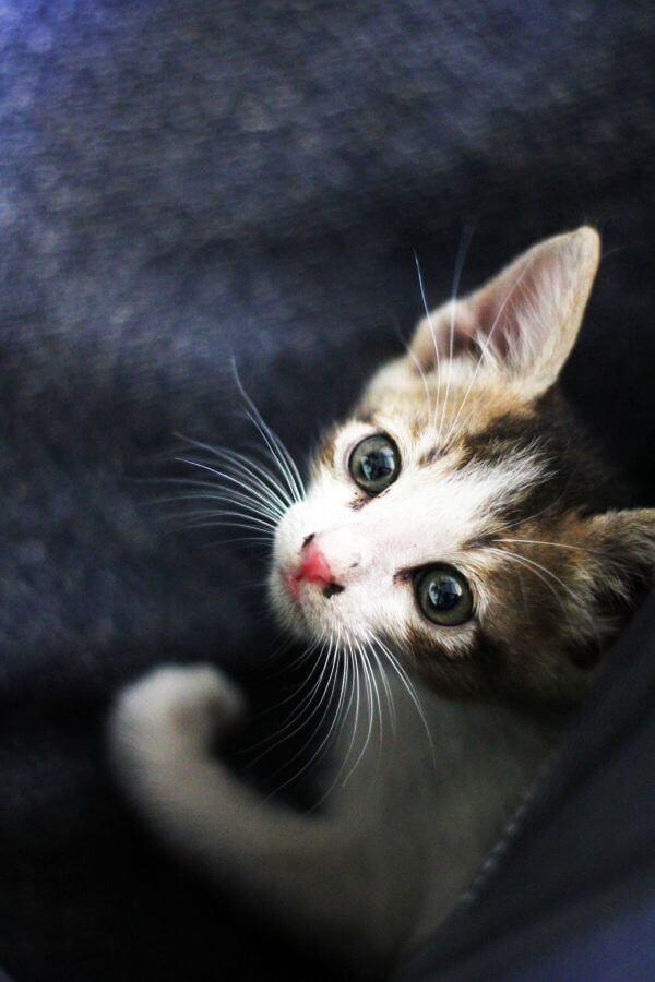 Baby Kitty Kitten photo