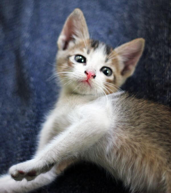 Cat Kitten Lying Down photo