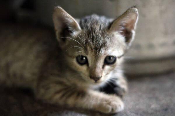 Cuddly Cute Kitten photo