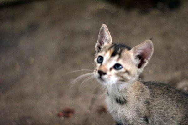 Cute Kitten Looking Up photo