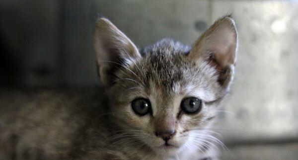 Cute Kitten Lovely photo