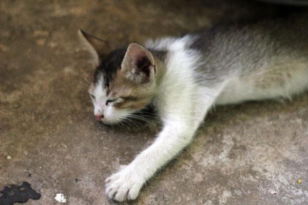 Cute Kitten Sleeping photo