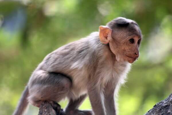 Cute Monkey Small photo